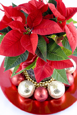 Christmas Flower on Hawaiian Christmas Party Decorations  Tropical Christmas Party Themes