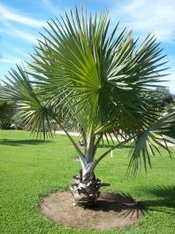 Planting Palm Trees