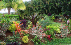 Image Result For Mounts Botanical Garden