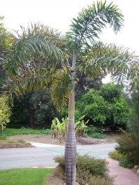 Outdoor Palm Tree Care